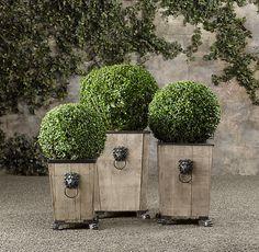 Ball Live Boxwood Topiary | Topiaries | Restoration Hardware