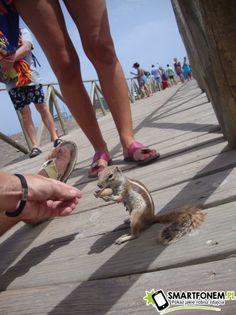 Wyspiarskie wiewióry :)