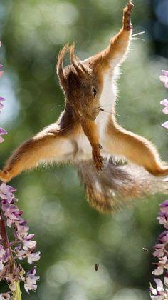 Animals and Nature fofo, lindo, bebe, Nature Animals, Animals And Pets, Cute Baby Animals, Funny Animals, Cute Squirrel, Squirrels, Ninja Squirrel, Funny Animal Photos, Tier Fotos