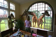 """""""Giraffe Manor"""" now this is my type of hotel. OMG! I want to go to Africa!!!"""