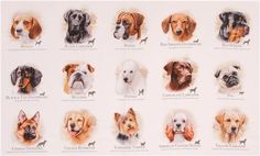 white cute dogs Dog Breeds fabric by Elizabeth's Studio 3