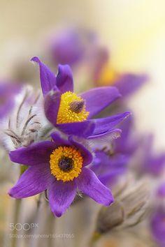 Purple by stefanovaart. @go4fotos