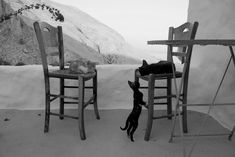 Bar Stools, Black And White, Cats, Places, Connect, Bond, Home Decor, People, Animaux