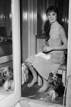Audrey Hepburn Through the Years