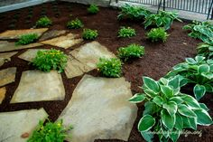 Large slabs of Tennessee flagging with green and gold and variegated hosta.