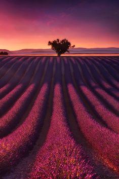 Photograph Purple stripes by Julien Delaval on 500px