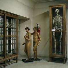 museoanatomiaAdanyEvaconGigante2.jpg (733×733)