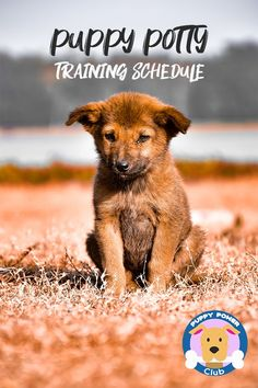 Puppy training schedule week by week. If you're trying to train your puppy to go outside, you need a puppy potty training schedule to keep your new puppy on track. Check out these puppy training tips to help make it easier. #PuppyPowerClub #pottytraining #puppies #puppytraining #dogs