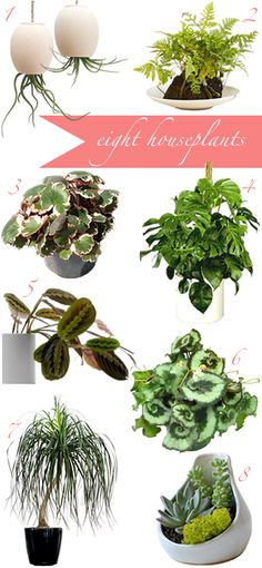 great houseplant buying guide.  thank you @Joanna Goddard, this will be so helpful for a brown thumb like me.