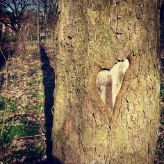 Heart of nature