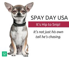 Image result for spay day usa 2020