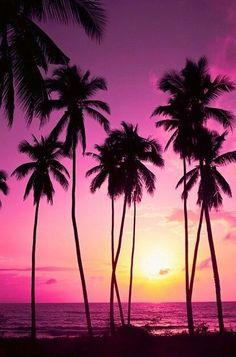 Palm Sunshine