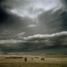Landscapes: Horses, Montana