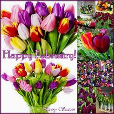 18 best new month greetings images on pinterest in 2018 new month greetings flowers garden tulips diva tulips flowers tulip m4hsunfo