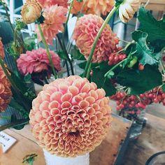 It's always a good idea to take a flower break  // @jojotastic on instagram