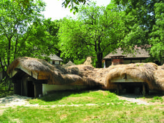 bordeiul Draghiceni, Olt, sec. al XIX-lea Homesteads, Traditional House, Old Houses, Museum, Europe, House Design, Country, Plants, Romania