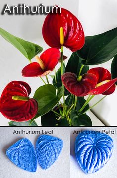 Anthuruim cutters and veiners, sugar flowers, gumpaste flowers, cutters, veiners,leaves Edible Diamonds, First Dates, Candy Shop, Sugar Flowers, Gum Paste, Types Of Art, Food Coloring, Damask, Cake Decorating