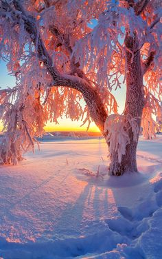Sunset in winter - Sunset in winter - Winter Photography, Landscape Photography, Nature Photography, Winter Sunset, Winter Scenery, Winter Wallpaper, Nature Wallpaper, Winter Magic, Winter Snow