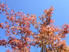 みのお山荘  風の杜の紅葉。10月中旬です。