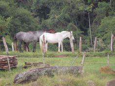 Cavalos - Campo