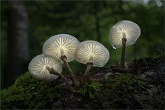 Another Daydream von Moonshroom