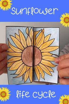 Re-cap the stages of a sunflower's life cycle with this fun folding craft. Print the black and white template onto paper or card for pupils to colour and cut out. No glue or tape required! Hand Crafts For Kids, Creative Activities For Kids, Science For Kids, Art For Kids, Sunflower Life Cycle, Butterfly Life Cycle, Cool Paper Crafts, Diy Arts And Crafts, Kindergarten Activities