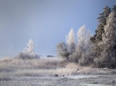 """Rauhreif im Mühlviertel"" (Bild: Till-Eulenspiegel) Snow, Nature, Outdoor, Pictures, Outdoors, Naturaleza, Outdoor Games, Nature Illustration, The Great Outdoors"