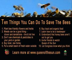 Save the Honey Bee - becoming a beekeeper is a little bit of a stretch for most people, but everything else on this list is doable