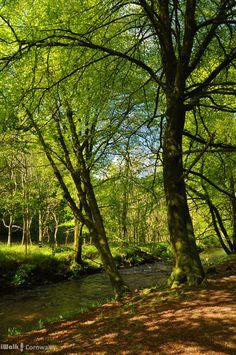 Woods along the River Fowey near St Neot, Cornwall