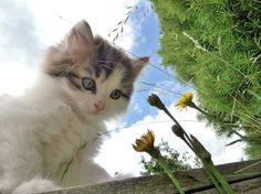 little cat exploring the world - Imgur