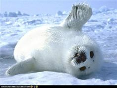 funny pictures - Daily Squee: Come On! The Ice Is Nice!