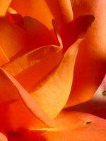 Summer Colors : Orange Juice by yurushi