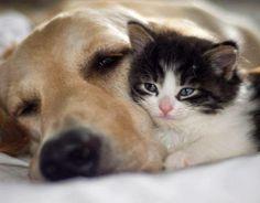 Amitiés entre un chien et un chat