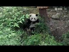 Meng Lan 26SEP2016 - YouTube