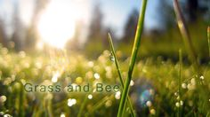 Grass and Bee  Light airy simple composition on acoustic instruments. Nice positive guitar tune in soft warm mix.