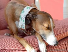 DIY Upcycled Vintage Fabric and Leather Half Chain Martingale Collar