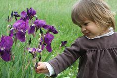 gli iris del giardino