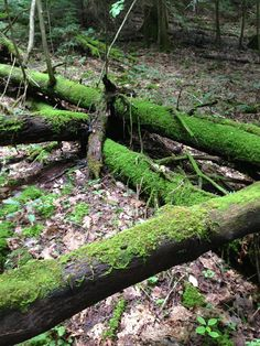 GO GREEN: In the woods of Monterey, Tennessee, it's green and mossy and mushroomy, thanks to lots of shade, lots of decaying material and LOTS of rain. #nobummersummer