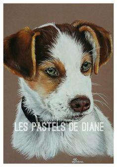 Tyson, chien croisé Husky, pastels secs