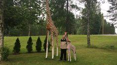 Karjalaissyntyisen Veikko Koukosen aika kävi eläkkeellä pitkäksi. Käsityöläissuvun vesa sai idean: nyt pihalla on 60 puista eläintä. Giraffe, Animals, Felt Giraffe, Animales, Animaux, Giraffes, Animal, Animais