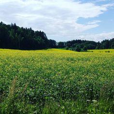 A field in Hämeenkylä, Vantaa