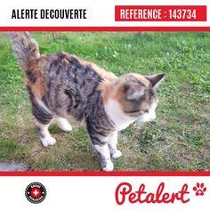 Cette Alerte (143734) est désormais close : elle n'est donc plus visible sur la plate-forme Petalert Suisse. L'émetteur de cette Alerte ne s'est plus manifesté, malgré nos relances. Merci pour votre aide. Visible, Aide, Cats, Animals, Switzerland, Thanks, Shape, Gatos, Animales