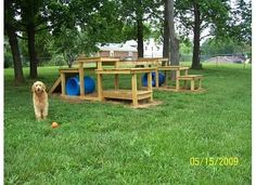 Superbe The Backyard Dog Playground Is Finished! Pics