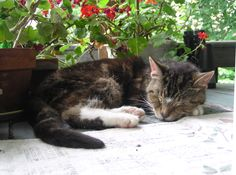Loving Care for Your Senior Cat, Part 1