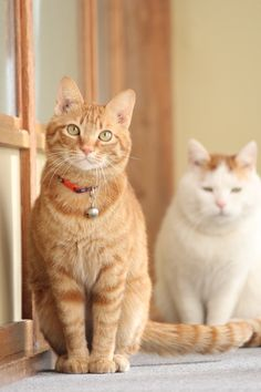 cybergata: http://cybergata.tumblr.com/ Ginger Cat and Shironeko.
