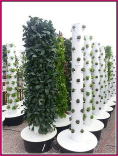 Hydroponic Gardening Ideas Vertical garden with hydroponics in Summerland Vertical Hydroponics, Hydroponic Farming, Hydroponic Growing, Vertical Farming, Growing Plants, Aquaponics Diy, Vertical Gardens, Indoor Vegetable Gardening, Gardening Tips