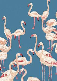 http://www.printsourcenewyork.com flamingos