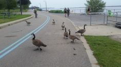 Mid-run traffic jam