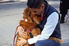 Esta Golden Retriever está obcecada em abraçar as pessoas