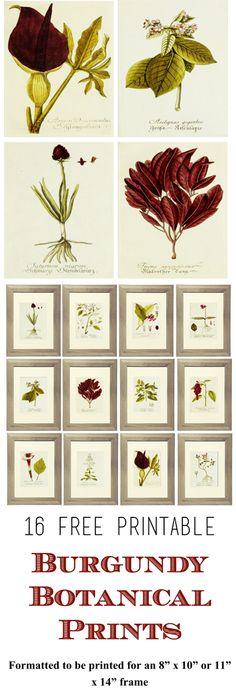 "16 Free Printable Burgundy Botanical Prints.  Formatted to be printed for an 8"" x 10"" or 11"" x 14"" frame.  www.simplymadebyrebecca.wordpress.com"